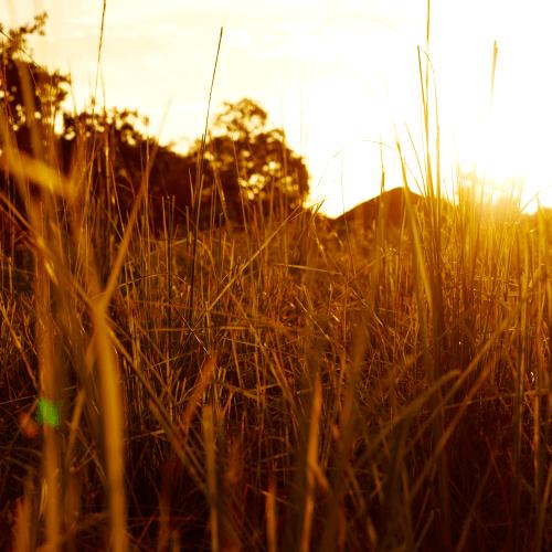 Golden Sunset - POZA Print 13